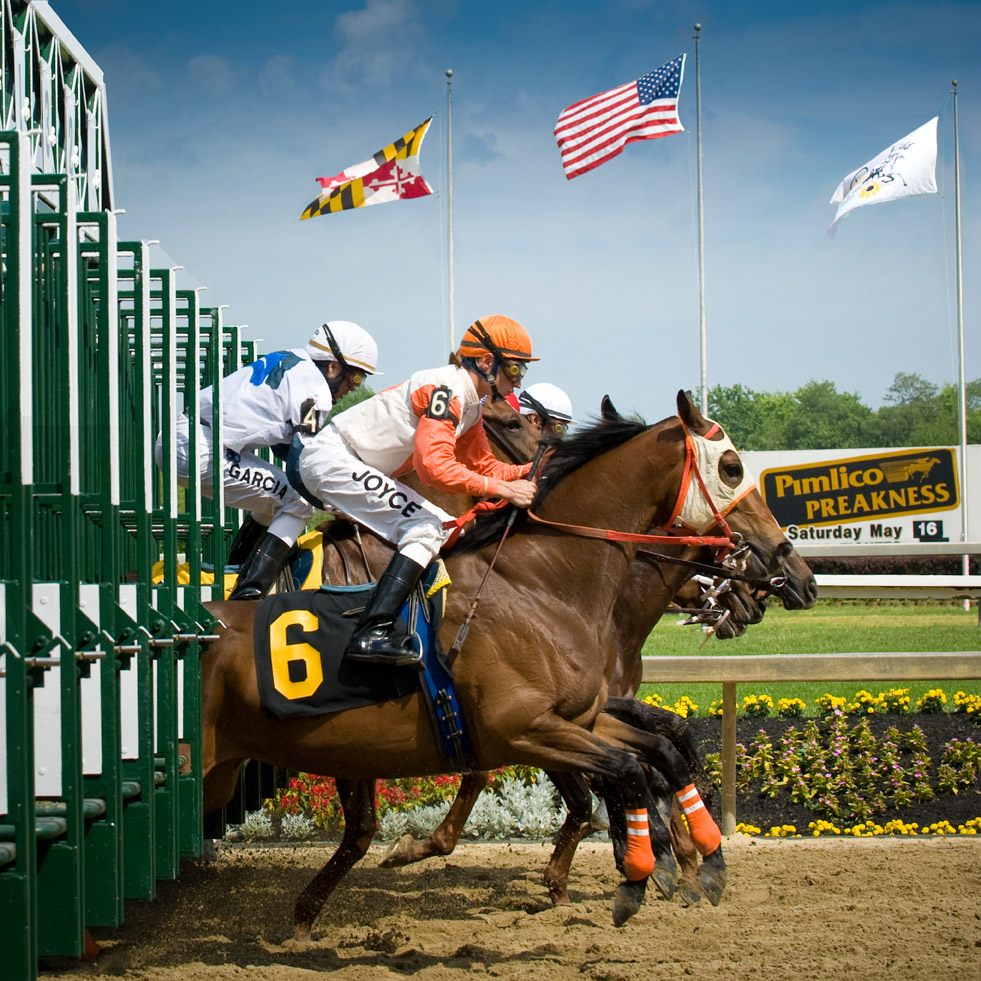 Horses leaping out of the gate at the start of the Preakness Stakes horse race