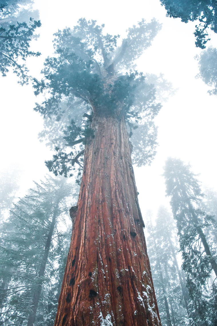 General Sherman, Sequoia, California landscape photography by Mike Morgan.