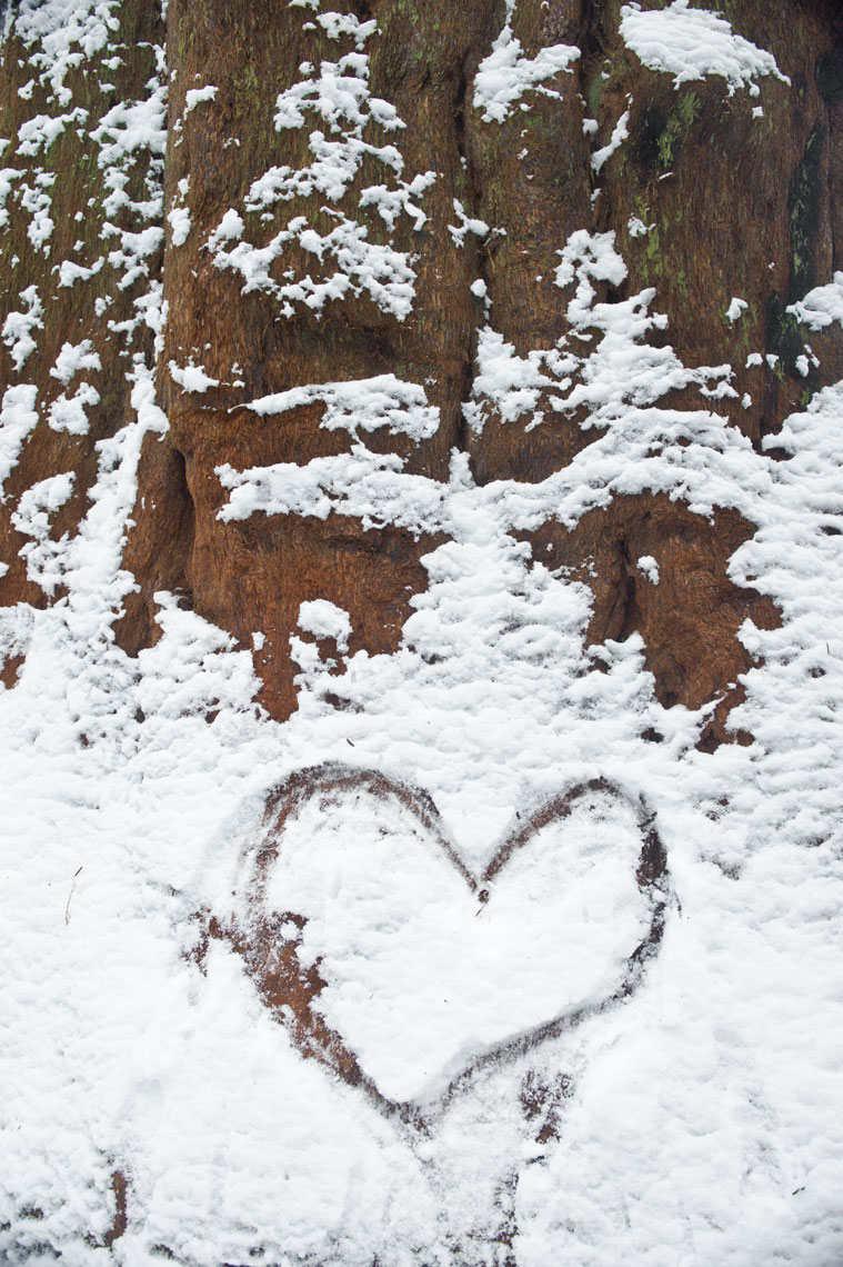 A message in the snow on a redwood in Sequoia National Park, California