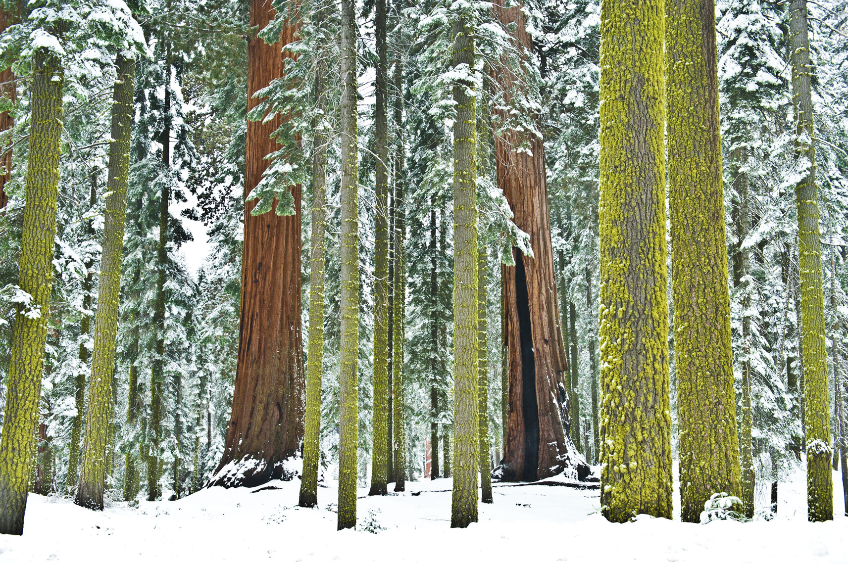 Sequoia and Kings Canyon National Park, California landscape photography by Mike Morgan.