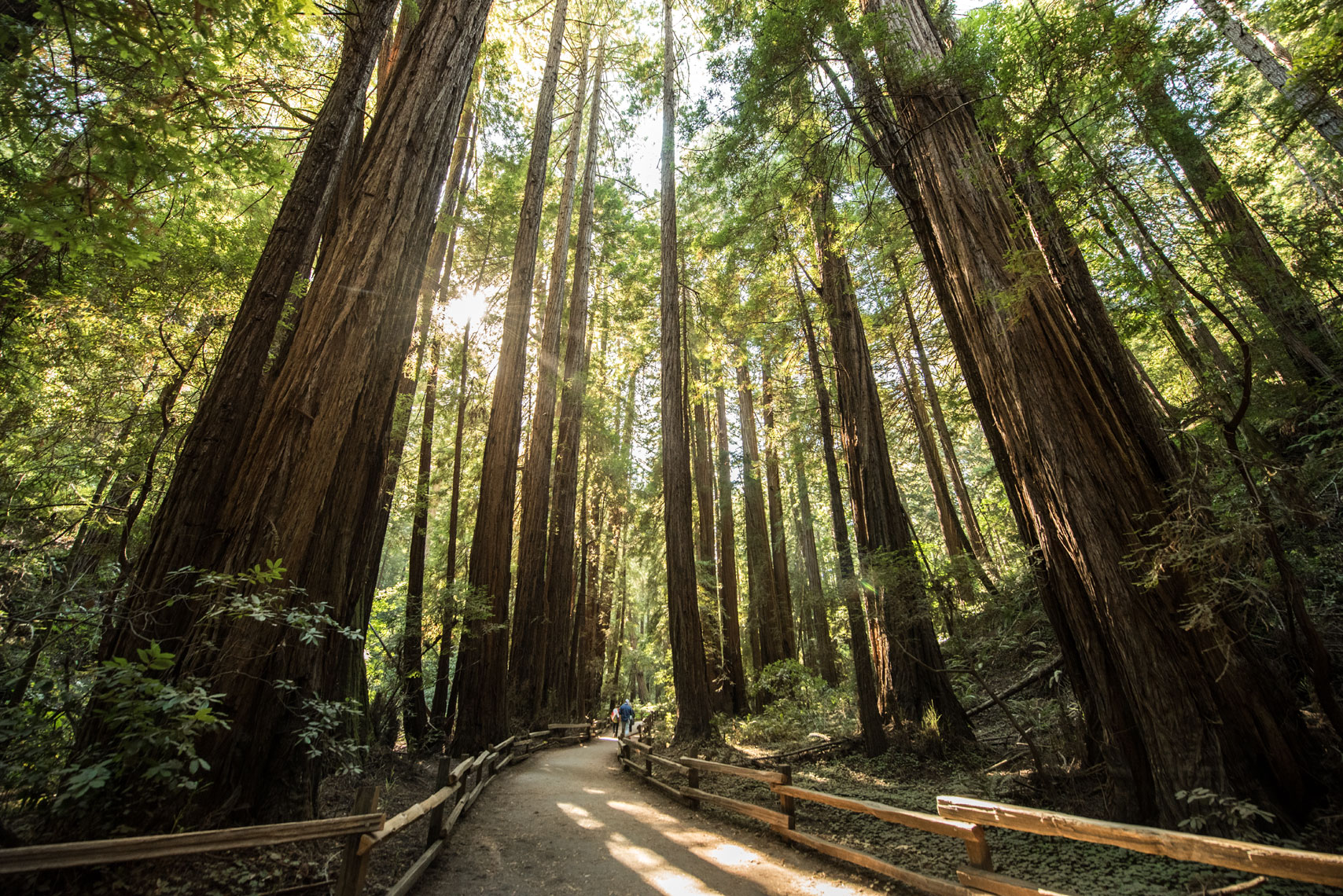 Muir Woods, by California landscape photographer Mike Morgan.